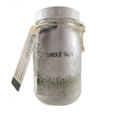 fungaea organic sprout kit