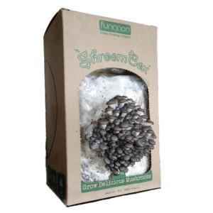 shroombox-fruiting